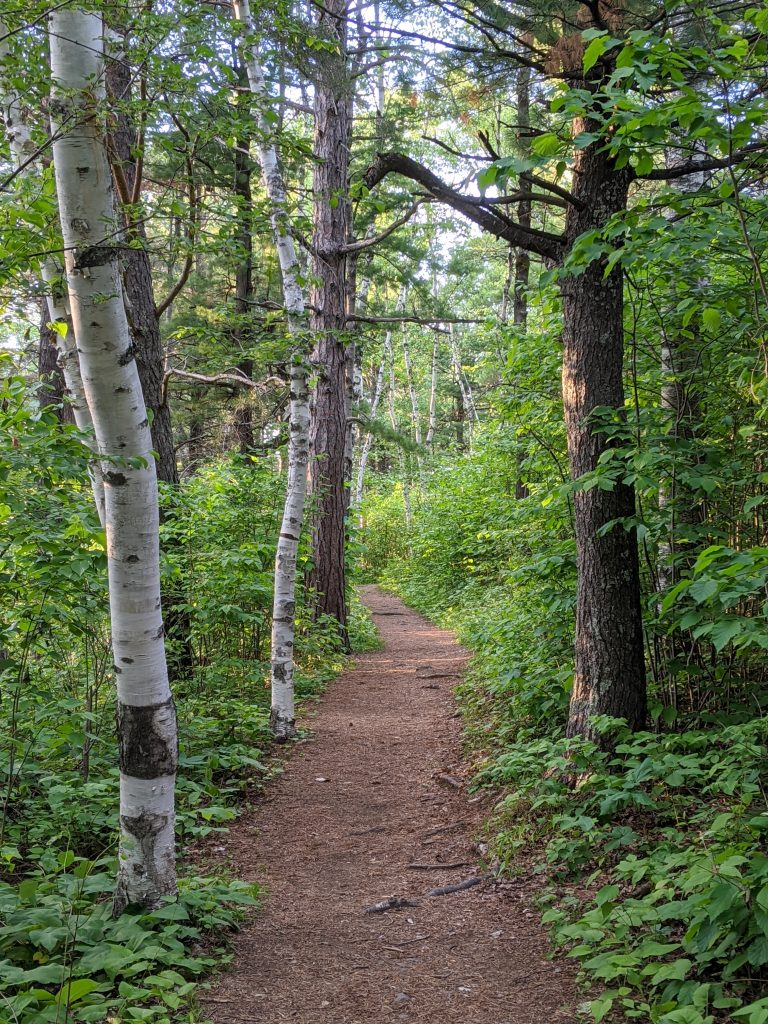 path with aspen