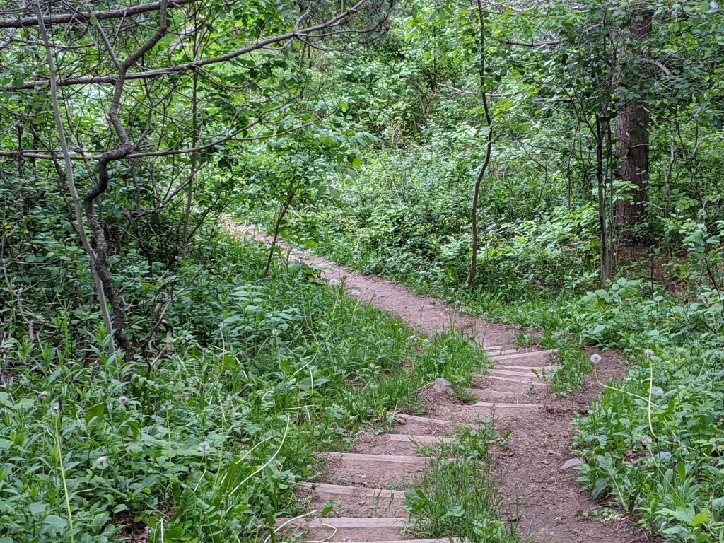 foot path through woods