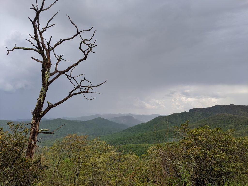 view of smoky mountains with dead tree snag