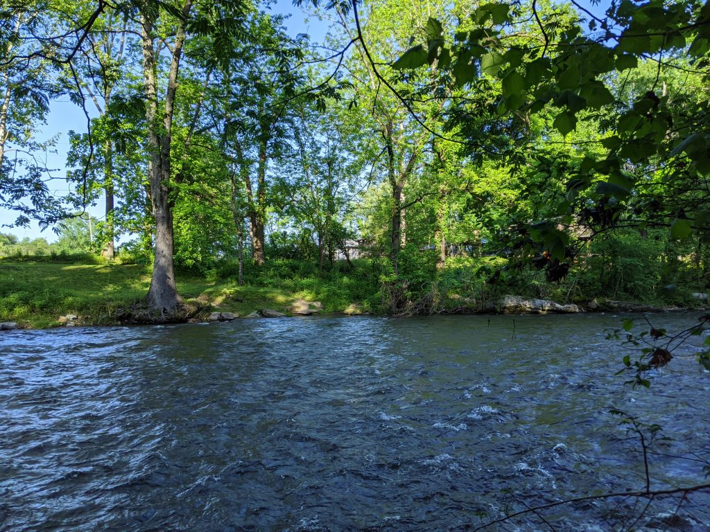 wide dark river with trees