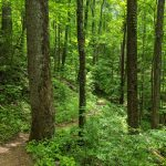 50 Hikes 50 States--Tennessee