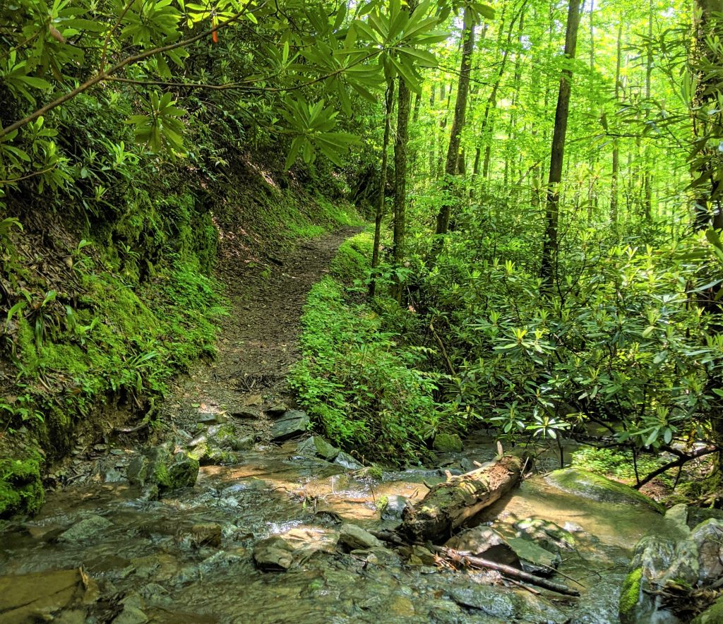 trail over creek with ferns