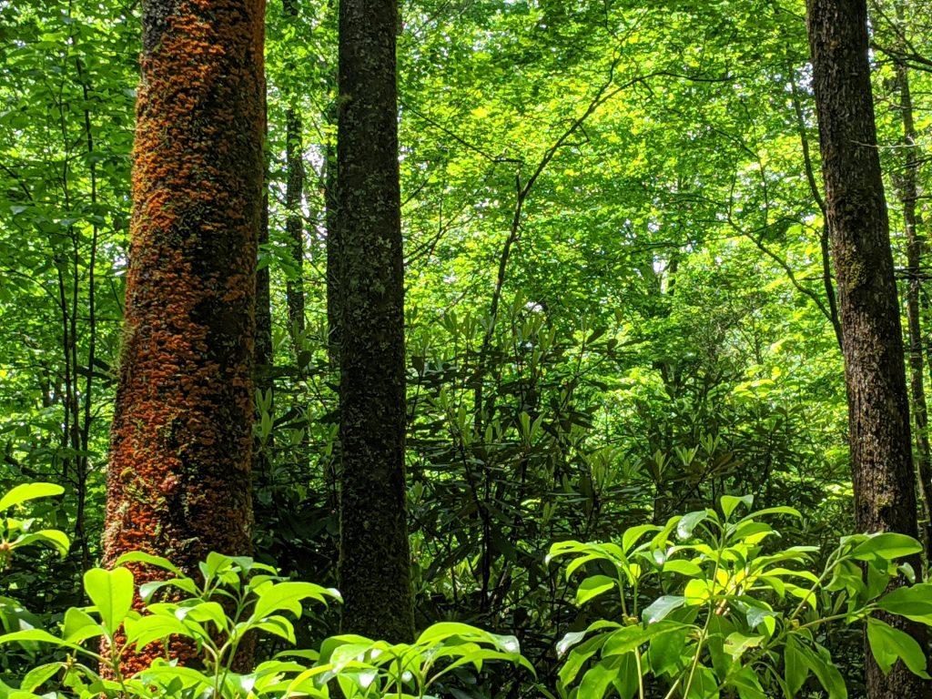 lush hardwood forest