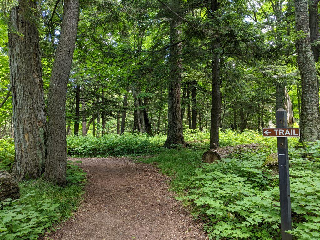 virgin woods
