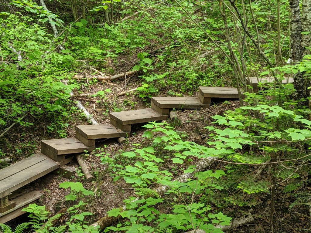 steps on trail