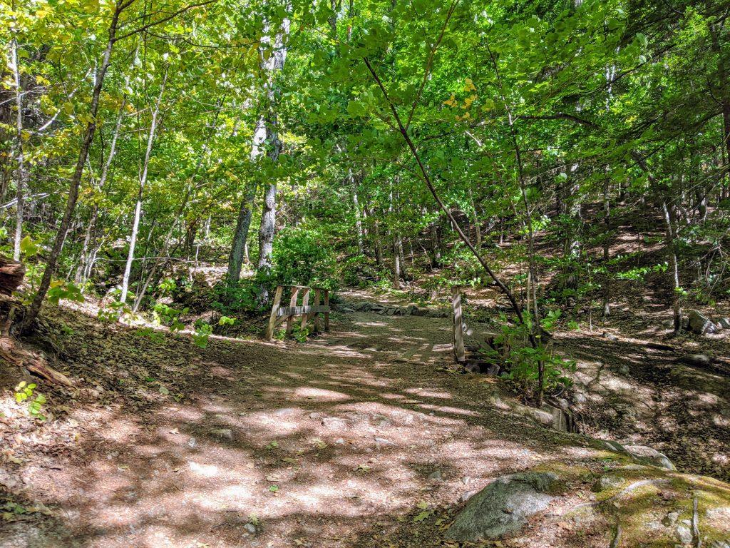 bridge over path in woods
