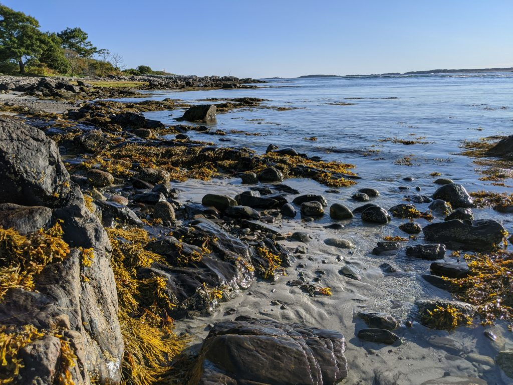 coast of maine with seaweed