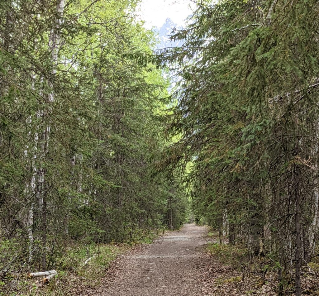 iditarod trail